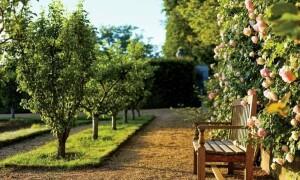 Как грамотно сделать планировку фруктового сада