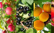 Таблица совместимости плодовых деревьев в саду