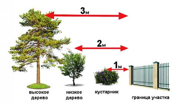 расстояние дерева от забора