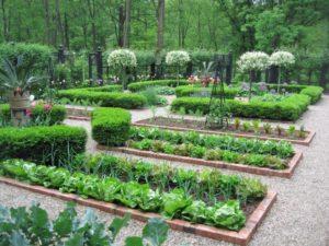 овощи на участке в регулярном стиле