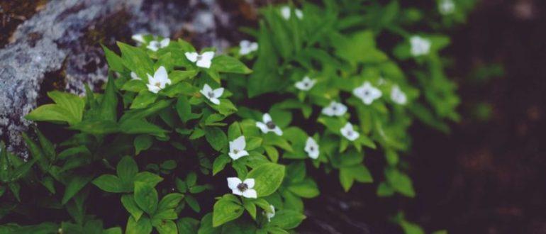 растения индикаторы почв